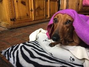 Lulu vous accompagne avec le coeur